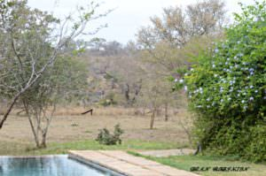 Best Time to Visit Timbavati